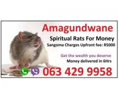 Money Spells amagundwane and spiritual rats That Work 100% Guarantee +27634299958 baba messe